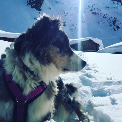 Das Leben ist schöner auf Schnee….