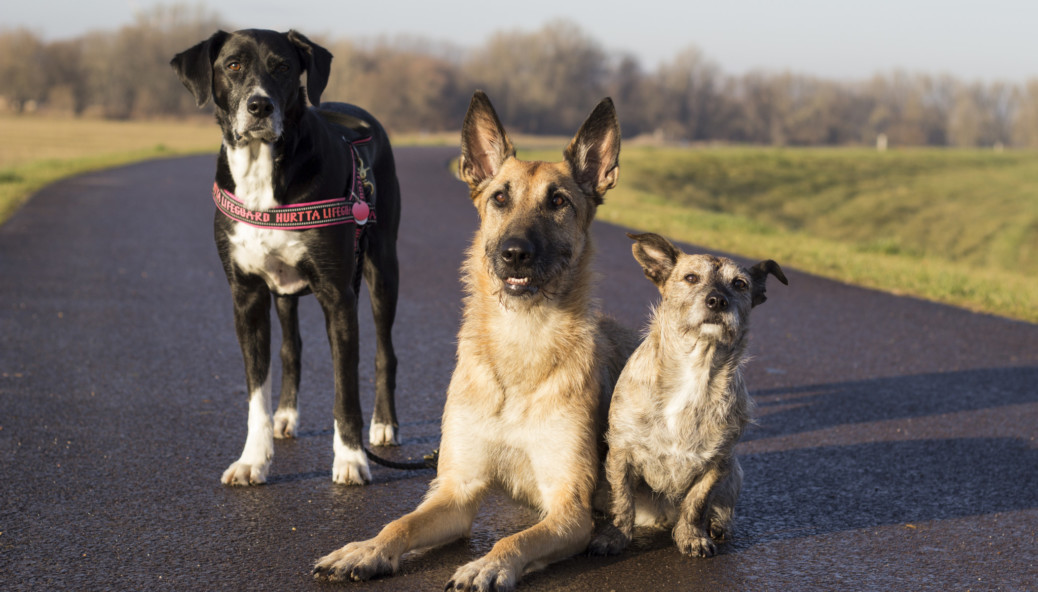 Facebook Gruppen für Hundehalter
