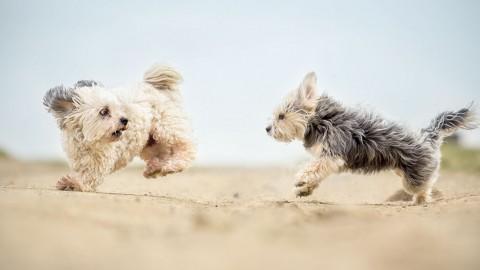 Zwei…Drei Hunde – Eine gute Idee?