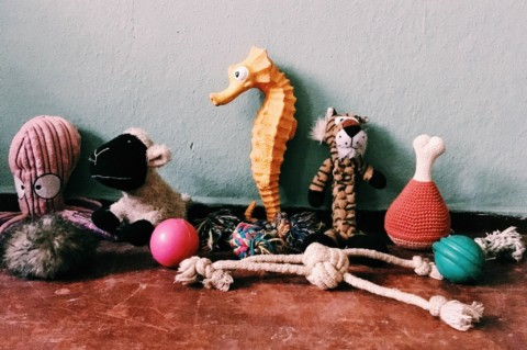3 Bälle, 1 Frisbee und ein Zoo: Inventur in der Spielzeugkiste