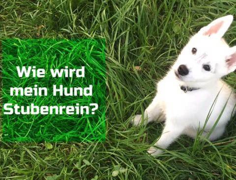 Wie wird mein Hund stubenrein?
