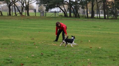Wie motivert man seinen Hund wohl zum spielen?