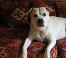 Justine privat – Die Leiden einer Hundemama