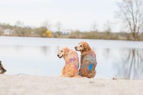Anekdoten aus dem Hundealltag