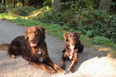 Das Rudel, Sozialverhalten bei Hunden