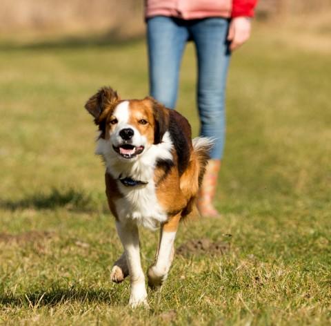 5 Situationen, in die nur Hundemenschen geraten