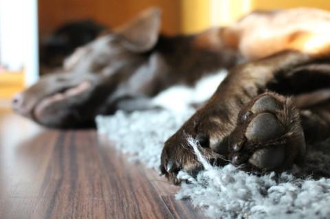 buisness dog – Hunde am Arbeitsplatz