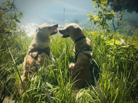 Amy & Lilly // eine ganz besondere Hunde-Freundschaft mit Rätseln