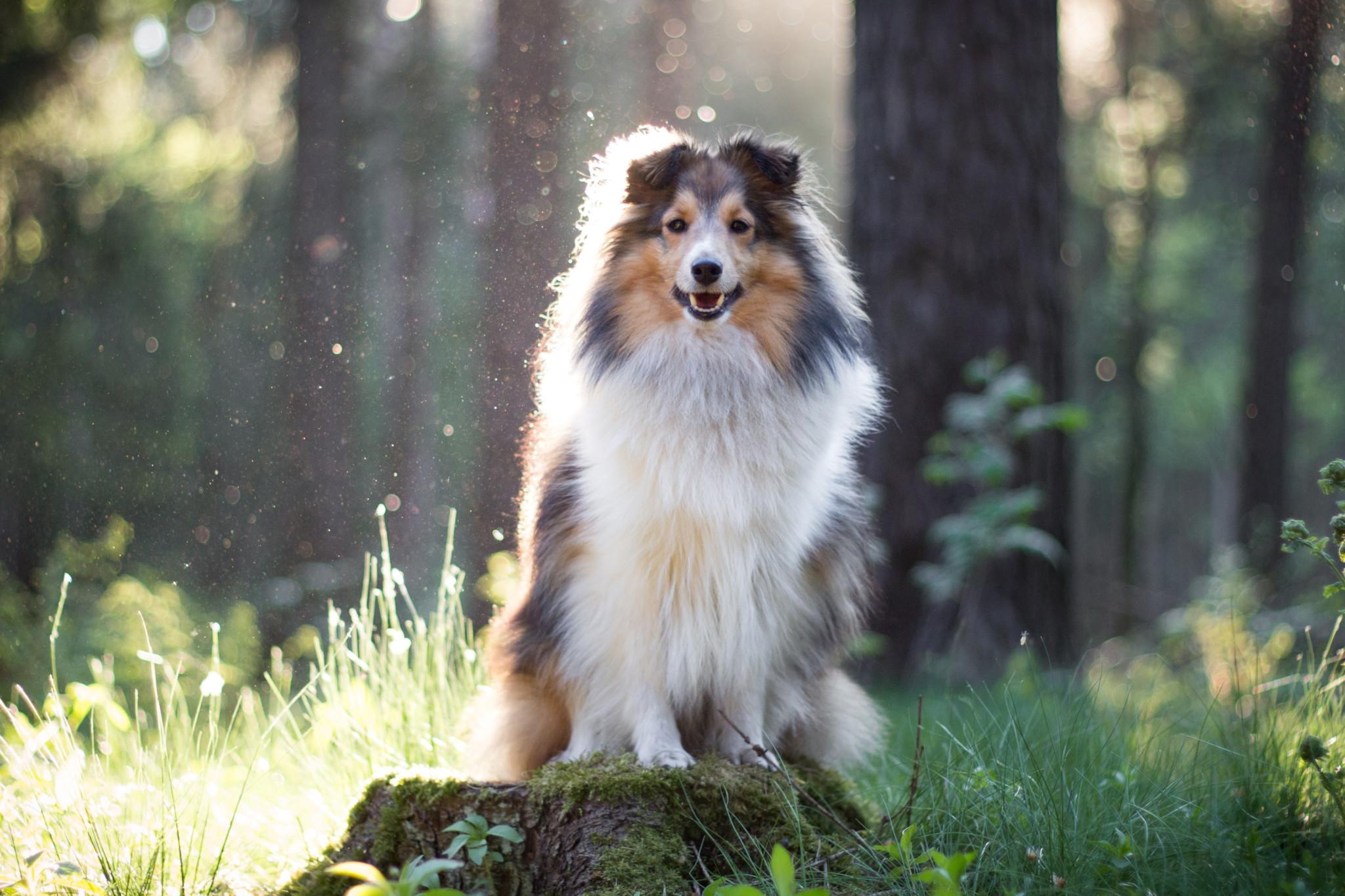 Objektiv Fotografie Hund
