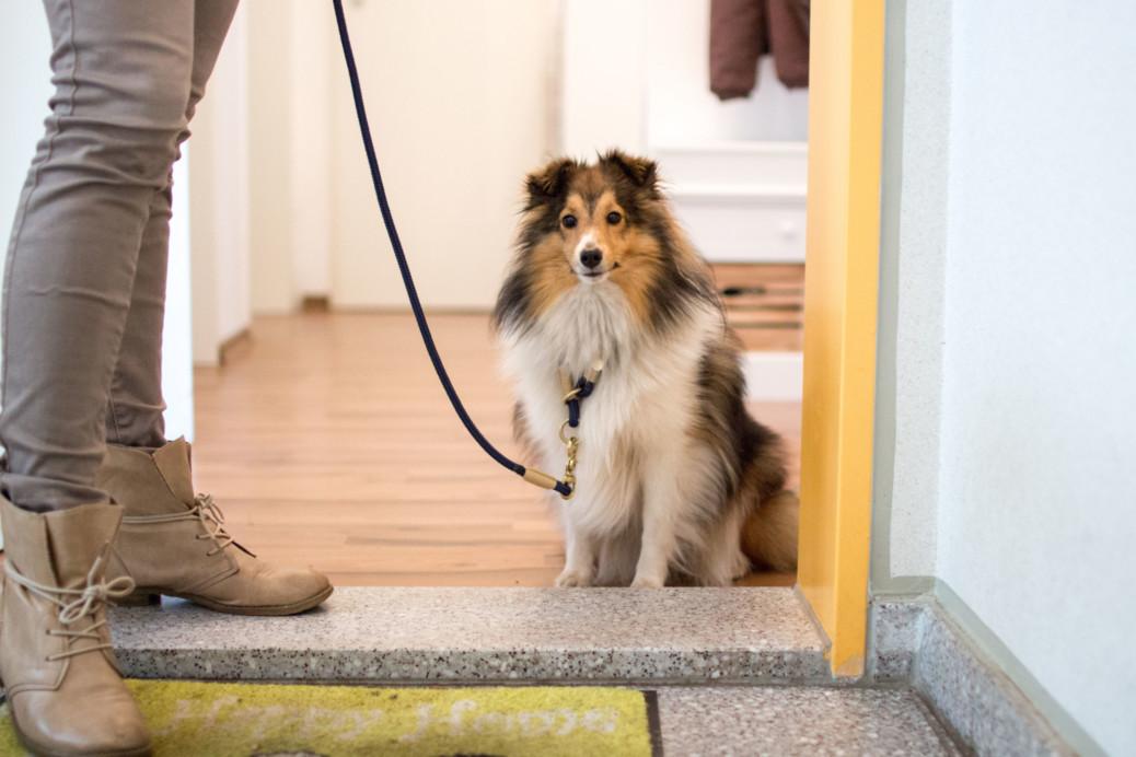 Hund wartet vor der Tür