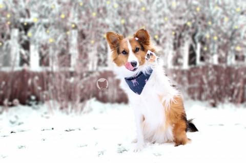 100% Hundenarr – gehörst Du auch dazu?