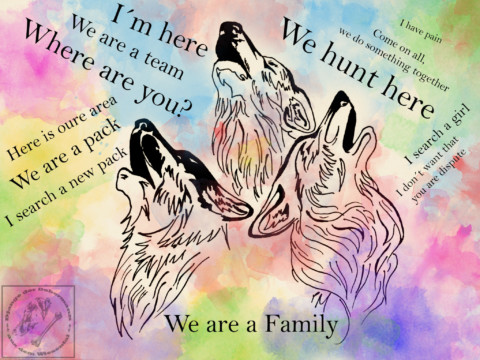 Wenn der Wolf in dir erwacht – Wie viel Wolfs-heulen steckt noch in unserem Hund?