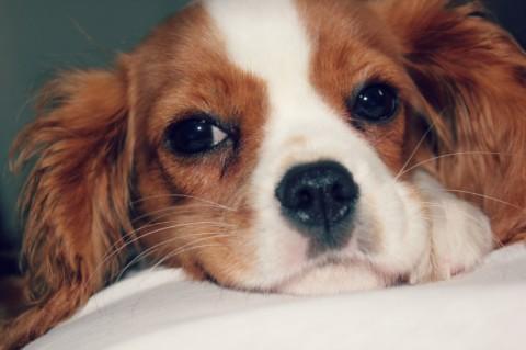 Zwischen Hund und Abitur
