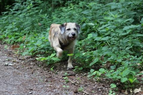 Angsthund – Wenn der Hund nicht mehr vor die Tür möchte…