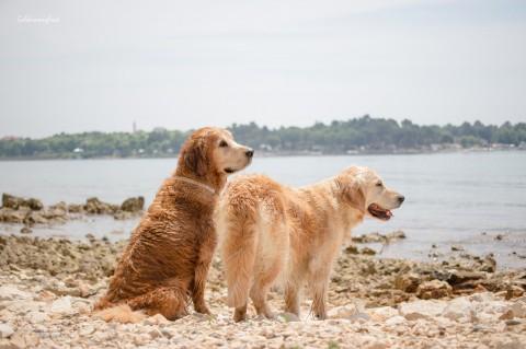Meer & Hund [Kroatien 2018]