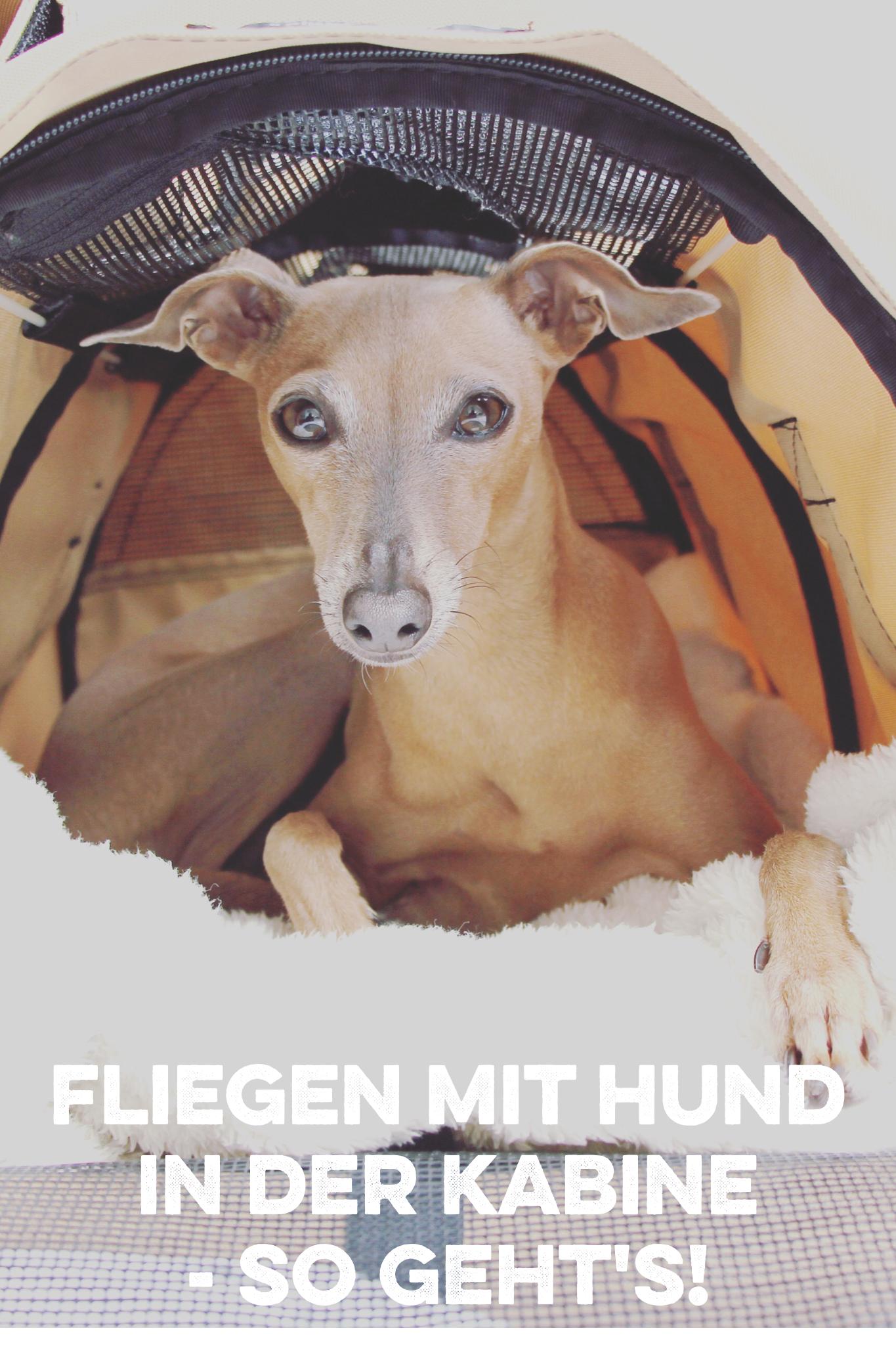 Wie geht Fliegen mit Hund in der Kabine?