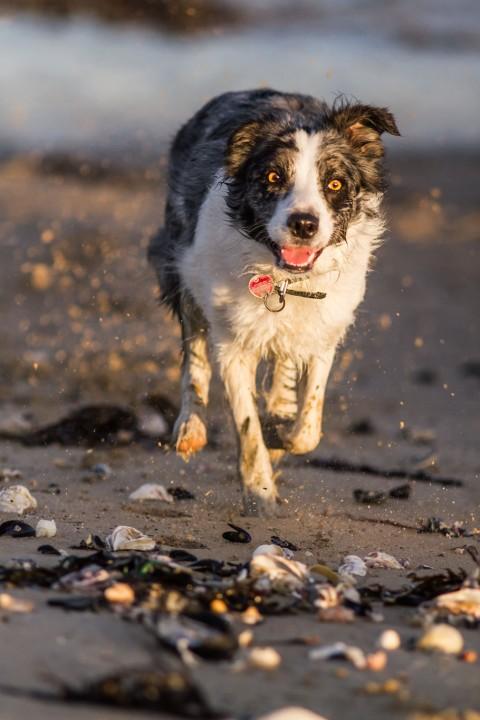Check- und Packliste für den Urlaub mit Hund in der Normandie