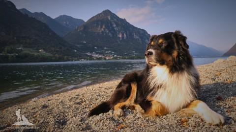 Geheimtipp für einen Urlaub mit Hund in Italien