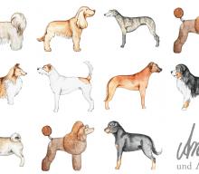 Hunderassen – Illustrationen für Hundeblogger, Teil II