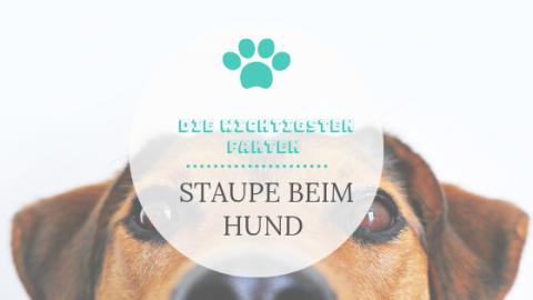 Staupe beim Hund – Das musst Du als Hundebesitzer wissen
