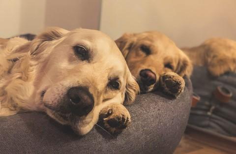 Welche Impfungen braucht mein Hund wirklich?  (Und welche besser nicht) Teil 1/2
