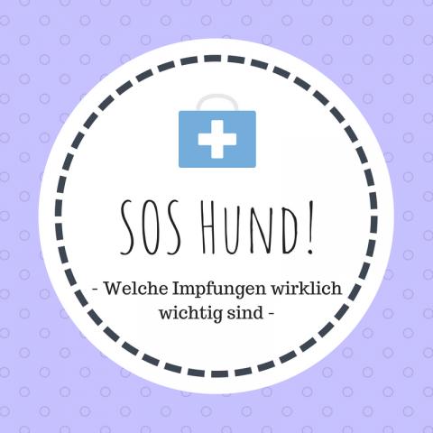 SOS Hund: Welche Impfungen wirklich wichtig sind [Enthält Werbung]