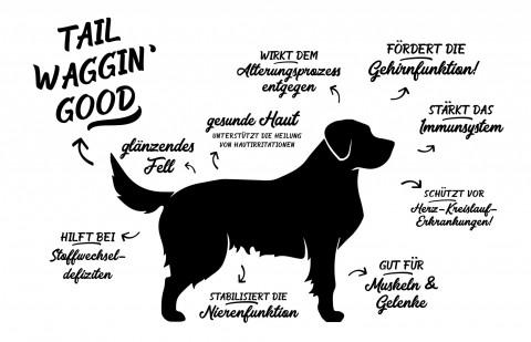 Fisch für Hunde – 5 wichtige Fragen