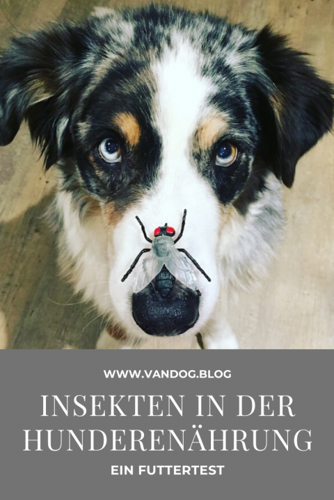 Bellfor – Hundefutter auf Insekten-Protein-Basis – Let's save the world!
