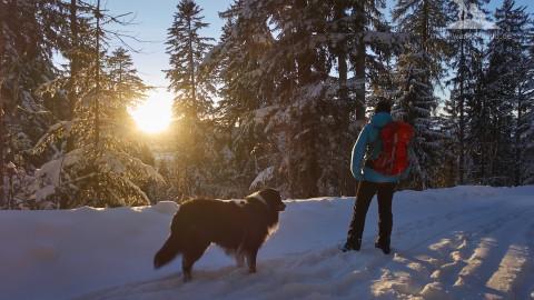 Winter Wanderung mit Hund: Bäckeralmrunde Inzell mit sonniger Aussicht