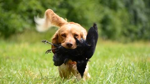 Jagdhunde – ein Überblick