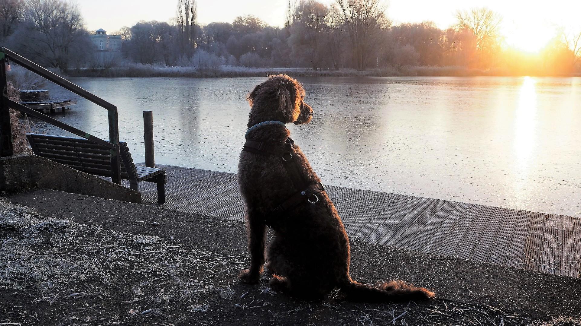 Jahresrückblick Hundeblogger