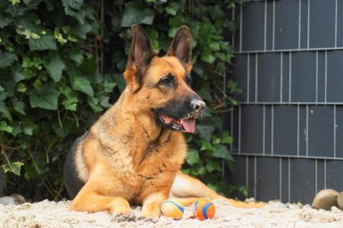 Hundebegegnungen – Sind Grenzen Ansichtssache?
