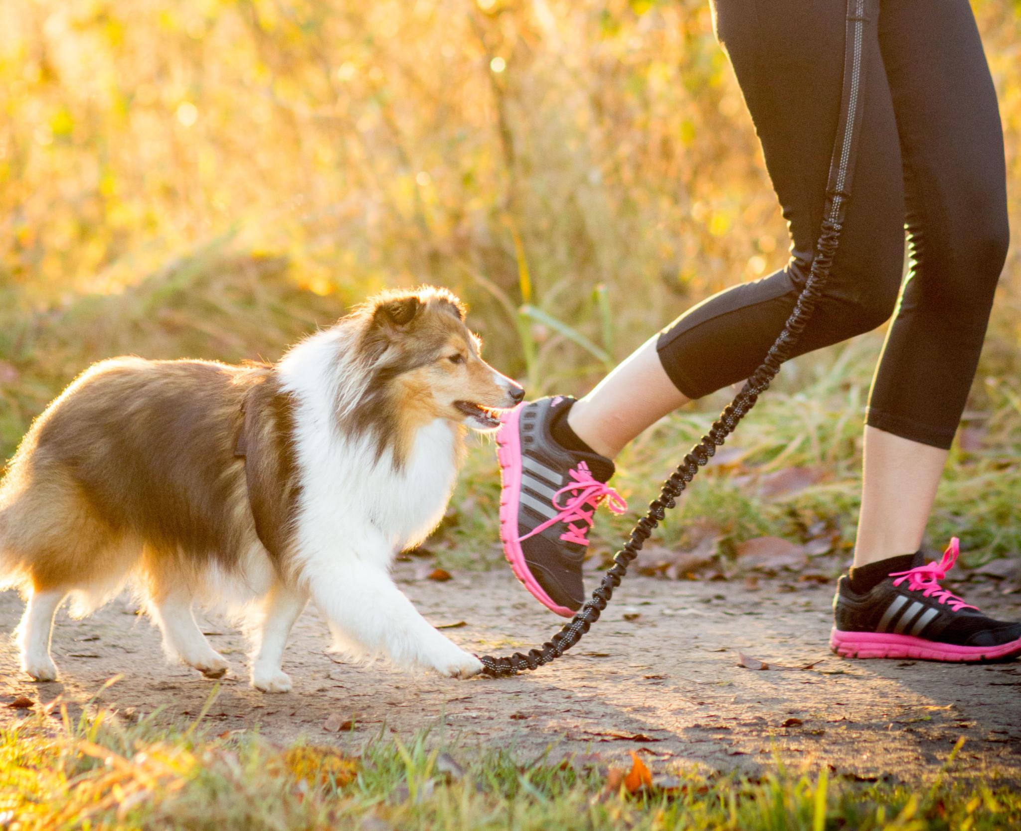Joggingleine für Hunde Erfahrungen
