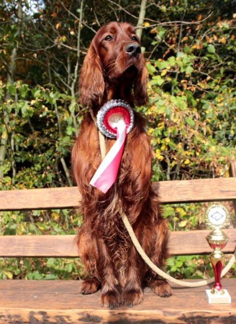 Jagdhunde und Hundzucht – der Liebster Award III