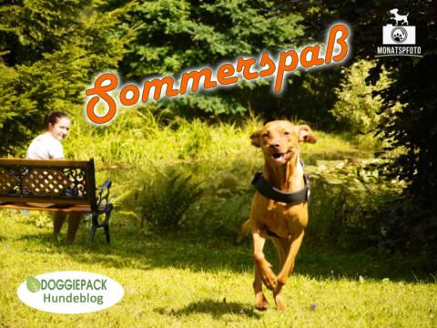 Monatspfoto Juli 17: Sommerspaß
