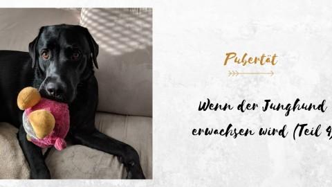 Wenn der Junghund erwachsen wird (Teil 4)