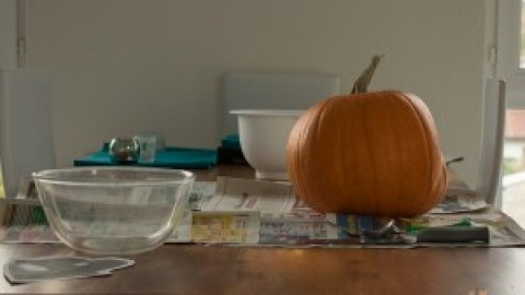 Monatspfoto Oktober – im Zeichen der Hunde-Kürbis