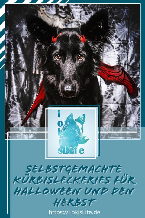 Hundekeks-Rezepte mit der Backmatte: Selbstgemachte Kürbisleckeries für Halloween und den Herbst