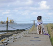 Cuxhaven – einen (hundtastischen) Urlaub wert?