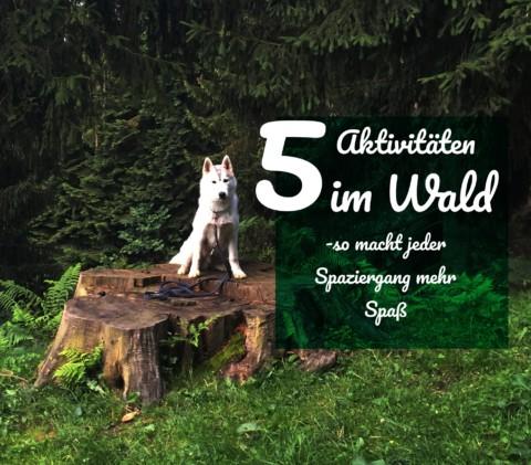 5 Aktivitäten im Wald – so macht der Spaziergang gleich viel mehr Spaß