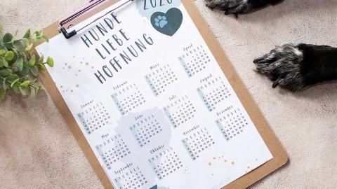 Kostenloser Kalender 2020 in 3 Varianten für Hundenarren, Nähjunkies und Katzenverehrer