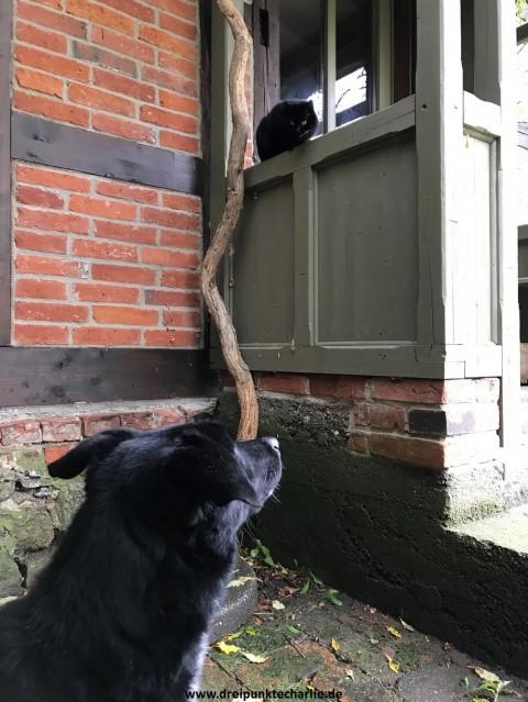 Alle unter einem Dach mit Hund und Katz