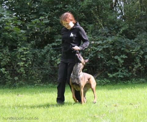 Vom Welpen zum Begleithund – Teil neun | So lernt dein Hund die Kehrtwende