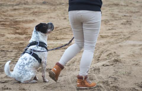 An der Leine und kein Interesse an anderen Hunden – das funktioniert!