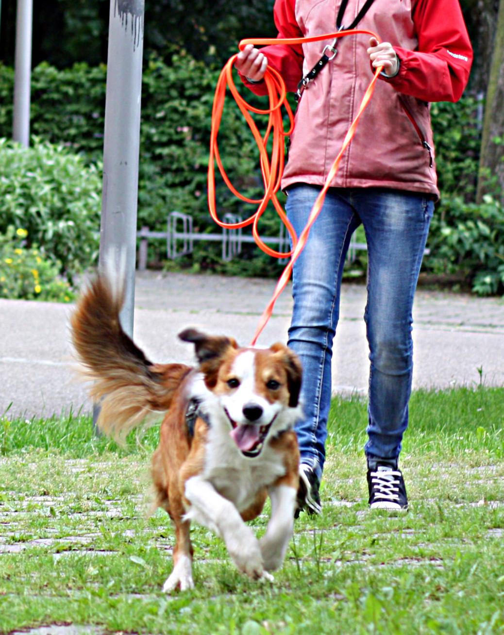 Mantrailing Hund