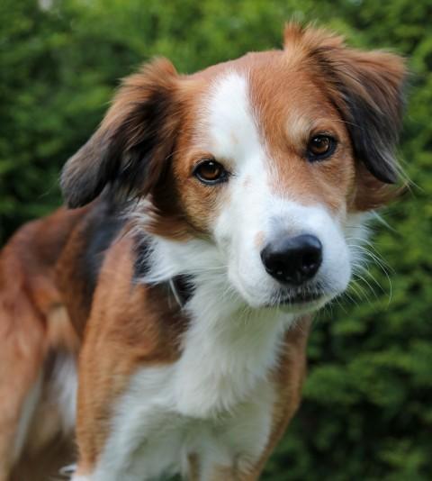 Klimt der Einzelhund – Ein Leben ohne die Königin