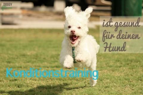 Warum ein gutes Konditionstraining für deinen Hund gesund ist