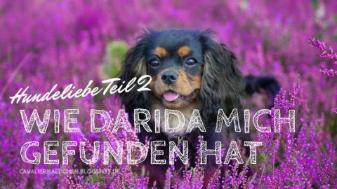 [midoggy Parade]: Hundeliebe Teil 2 – Wie Darida mich gefunden hat