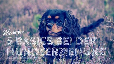 Hundeerziehung: Unsere 5 Basics bei Welpen