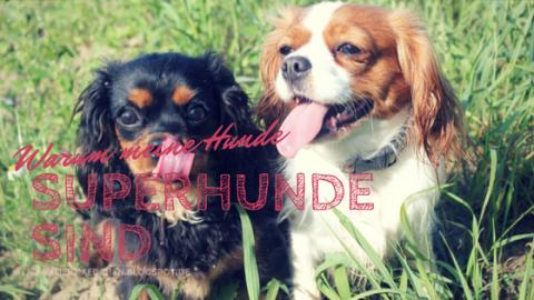 Warum meine Hunde Superhunde sind – eine Liebeserklärung an meine Mädchen
